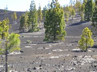 Life on Lava Fields