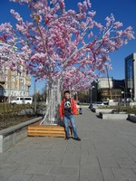 2018.04.29 This spring in Moscow artificial sakura trees are seemed to be planted everywhere, including the Turgenev's Square.