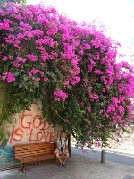 "2018.09.10 The quintessence of Christianity – in one phrase, ""God Is Love"", framed by flowers in the Old Jaffa, on Jewish land, where the religion if from"