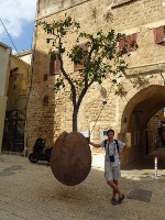 "2018.09.10 That ""Floating Orange Tree"" by Israeli artist Ran Morin in the Old Jaffa (Tel Aviv), which is actually stunted and more like a tangerine tree"