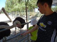 2019.06.05 Feeding an ostrich with caution.