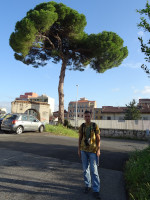 "2019.10.03 At the time of this photo I didn't know that this ""umbrella"" tree in Italy (Rome) is a stone pine, also known as Italian stone pine. :-)"