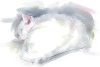 Cat Sketch  (digital painting)